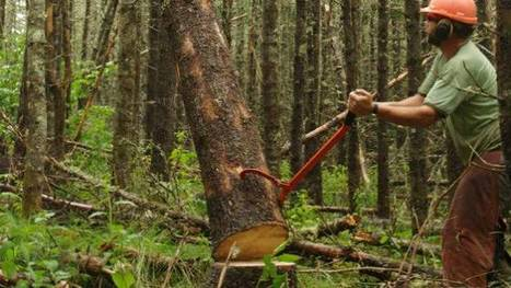 N.S. accepts forestry land as debt payment from lumber company | Timberland Investment | Scoop.it