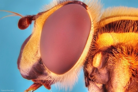 Incredible bug photos: Portraits of insects up close | 100 Acre Wood | Scoop.it