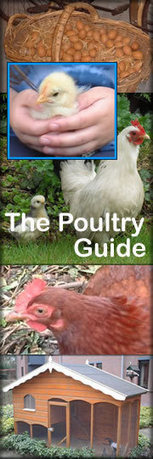 The Poultry Guide | Poultry Knowledge | Scoop.it