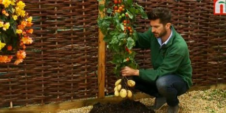 WATCH: The TomTato Is Here, And We Are Scared | Vertical Farm - Food Factory | Scoop.it