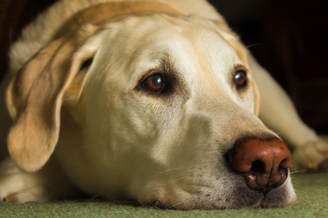 Dogs are capable of remembering pointless events | Food for Pets | Scoop.it