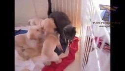 Puppy army vs one cat Cute and funny dog & cat compilation   How can I do....?   Scoop.it