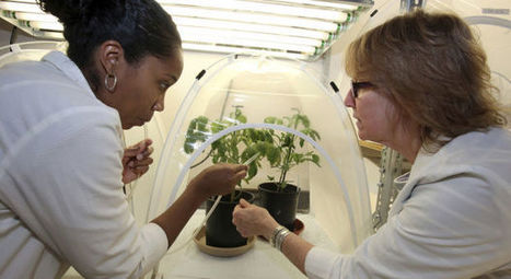 UA aiding citrus-disease research | Arizona Daily Star | CALS in the News | Scoop.it