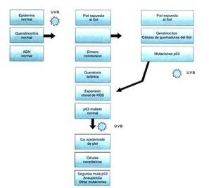 biología molecular   cintia montaño   Scoop.it
