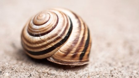 Lithium-ion batteries inspired by snail shells could prove longer-lasting | Five Regions of the Future | Scoop.it