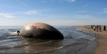 Une baleine échouée sur une plage de Camargue   Chronique d'un pays où il ne se passe rien... ou presque !   Scoop.it