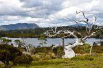 En Tasmanie, randonnée aux sources du monde - Le Monde | Ce qui m'intéresse | Scoop.it