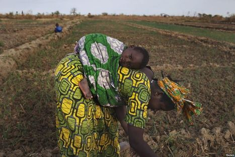 Le changement climatique, une menace croissante à la production agricole - La Voix de l'Amérique | START Global Environmental Change | Scoop.it