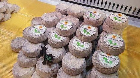 Journées gastronomiques de Sologne : le célèbre fromage Selles-sur-Cher fête ses 40 ans | thevoiceofcheese | Scoop.it