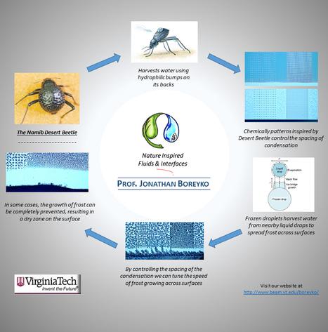 Une surface anti-givre inspirée... d'un scarabée du désert | EntomoNews | Scoop.it
