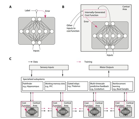 Towards an integration of deep learning and neuroscience | Biobit: Computational Neuroscience & Biocomputation | Scoop.it