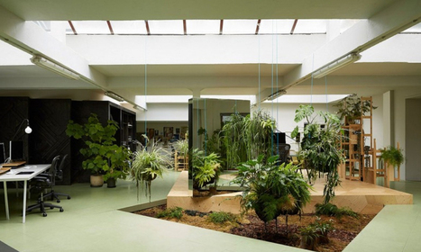 Give your Indoors a New Attractive Look with Indoor Plants | Inscape Indoor Plant Hire | Scoop.it
