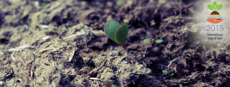OrganicStream.org - Organic 'Waste' meets Online Education | compost for food production from food scraps | Scoop.it