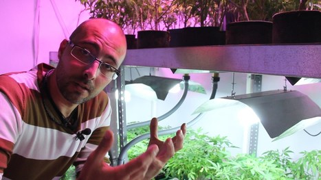 Marihuana Television News 11, Especial Growmed | thc barcelona | Scoop.it
