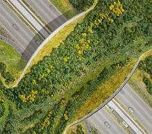 Le pont écologique pour animaux ... | Nature et urbanisme | Scoop.it