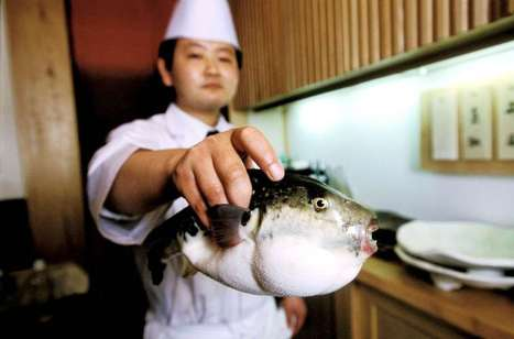 Fugu--before you eat, know your chef! | All about water, the oceans, environmental issues | Scoop.it