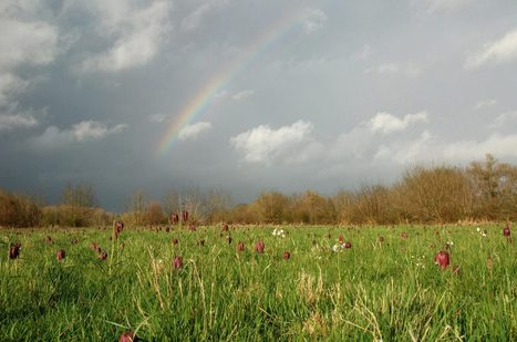 Rencontres naturalistes régionales Pays de la Loire 2013 | Biodiversité et sciences participatives | Scoop.it