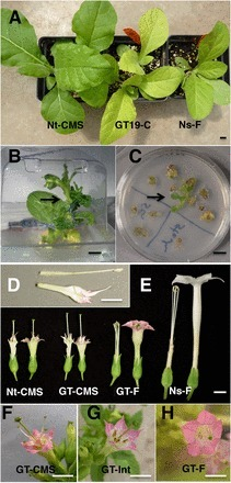 Cell-to-cell movement of mitochondria in plants | plant cell genetics | Scoop.it