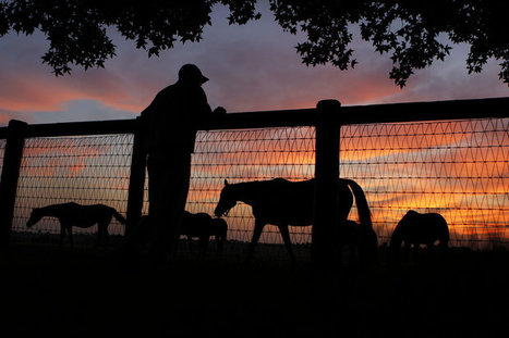 Fields of Dreams: At fabled Claiborne Farm, yearling training is kindergarten for horses | Horse Racing News | Scoop.it