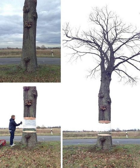 Tree Illusion by Daniel Siering and Mario Shu | Art Installations, Sculpture | Scoop.it