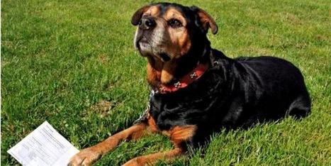 20 minutes - Zeus, un rottweiler, inscrit comme électeur - Insolite | Trollibre | Scoop.it
