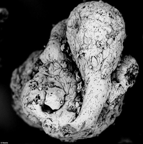 Coffee's 'Aliens' Revealed in These Amazing Microscopy Images   Coffee News   Scoop.it