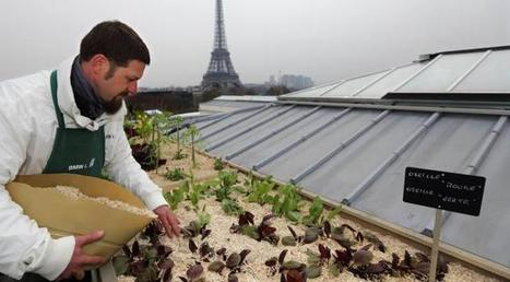 La ferme à la ville : de quoi témoigne le boom de l'agriculture urbaine ? | INNOVATION, AVENIR & TERRITOIRE(S) | Scoop.it