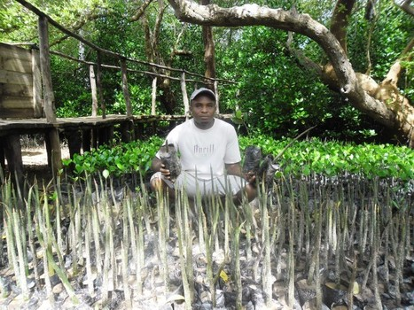 Mangrove conservation pays off for Kenya's coastal communities - Reuters AlertNet | Nature + Economics | Scoop.it