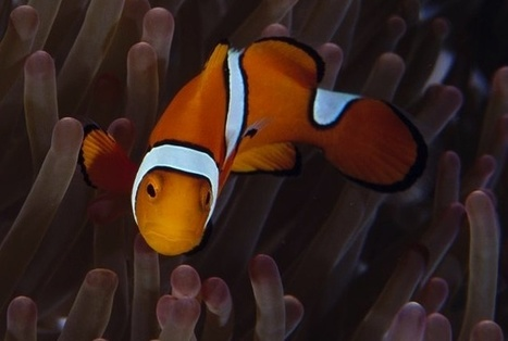 """Carbon Dioxide Is """"Driving Fish Crazy"""" and Threatening Their Survival, Study Finds 