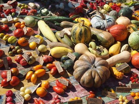 L'agro-industrie veut confisquer le mot «bio» | Questions de développement ... | Scoop.it