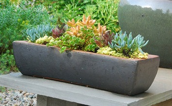 Succulents Galore (and More) with Avant Gardens   Container Gardening   Scoop.it