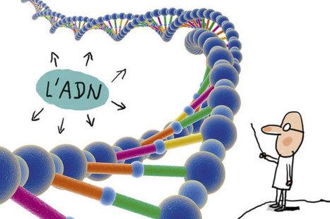 C'est quoi, une maladie génétique ? -   1jour1actu   Scoop.it