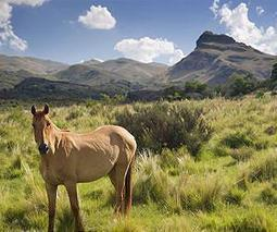 Ancient beasts roam Spain's wilderness | Sustain Our Earth | Scoop.it