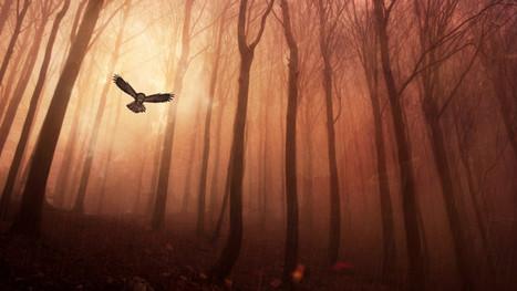 owl forest HD | Hq Wallpapers Fun | hd-wallpaper-fun | Scoop.it