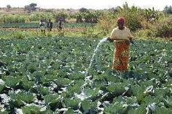 African agriculture research receives major boost - GhanaWeb | Agricultural & Horticultural Industry News | Scoop.it