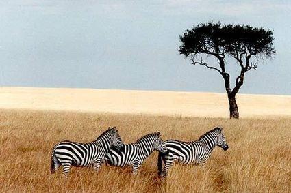 Le e-tourisme en Afrique : les medias sociaux, Internet, les meilleurs outils. | Le journal de LN | Scoop.it