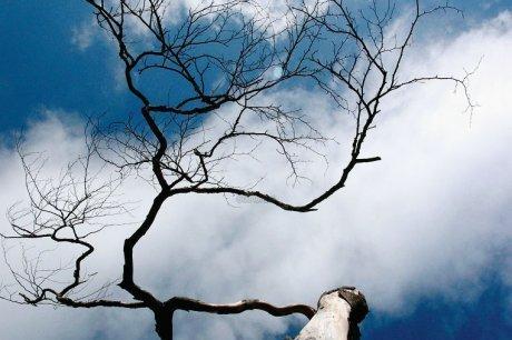 Les deux tiers des arbres sont vulnérables à la sécheresse | Agriculture en Gironde | Scoop.it