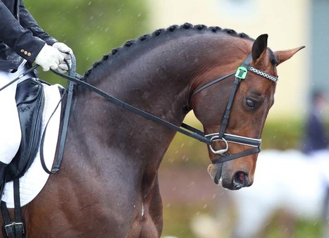 Olympic Dressage: Row over Australian team defies resolution | Fran Jurga: Equestrian Sport News | Scoop.it