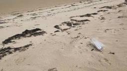 Plus de 30 000 morses s'entassent sur une plage faute à la disparition de la banquise | environnement, | Scoop.it