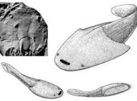 Etude sur l'apparition des mâchoires chez les vertébrés | Aux origines | Scoop.it