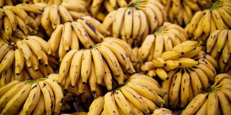 Yes, We Need No GMO Bananas | Transformative Space | Scoop.it
