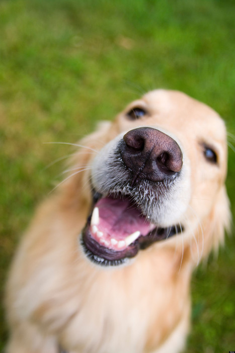 """Natural may not be the best for your pet's Dental Health, or """"Don't Give a Dog a Bone"""" 