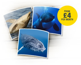 #Adopt a #Dolphin, #Orca or #HumpbackWhale for only £4 per month! | Rescue our Ocean's & it's species from Man's Pollution! | Scoop.it