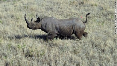 HUNTING & POACHING: can the practice of hunting actually save rhinos? | > Animal Welfare | Scoop.it