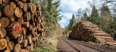 Les opposants au projet de scierie géante du Morvan soutenus par une décision du Conseil d'Etat | Notre Dame Des Bois | Scoop.it