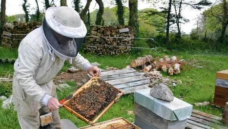 Une production bretonne apicole sédentaire - Journal Paysan Breton | Filière apicole française | Scoop.it