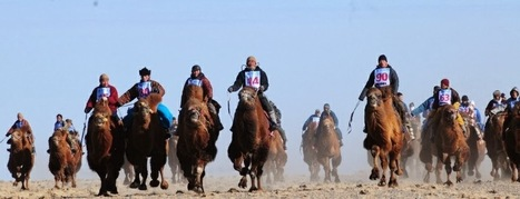 Goyo Travel: Top 5 Places for Horse Riding in Mongolia   Goyo Travel   Scoop.it