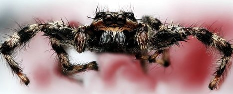 Turns out spiders can hear you from across the room | Environment Wildlife Conservation | Scoop.it