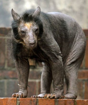 Do You Recognize These Animals Without Hair? | Rainforest Animals | Scoop.it
