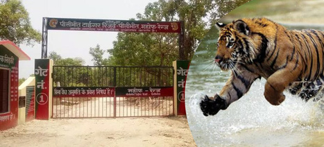 Pilibhit Tiger Reserve Reopens for Visitors: Tour My India | India Travel & Tourism | Scoop.it